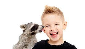 Portrait of a beautiful cheerful boy and a raccoon, who kisses him stock images