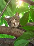 Portrait of a beautiful cute cat sitting on a tree surrounded by green foliage on a summer sunny day stock images