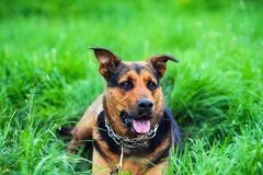 portrait of a beautiful dog stock images