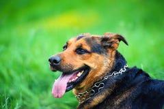 portrait of a beautiful dog royalty free stock photo