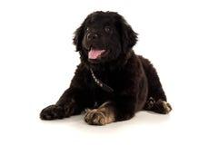 Portrait of a beautiful dog Stock Image