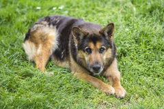 Portrait of a beautiful dog Stock Photography