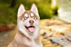 Portrait of beautiful dog royalty free stock photography