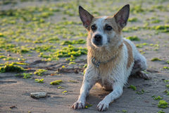 Portrait of beautiful dog on the seaside Royalty Free Stock Photos