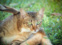 Portrait of beautiful domestic cat. In the garden Royalty Free Stock Image