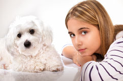 Portrait of beautiful girl and maltese dog. Studio shot Stock Images