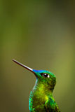 Portrait of beautiful green hummingbird Royalty Free Stock Image