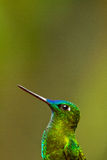 Portrait of beautiful green hummingbird Royalty Free Stock Images