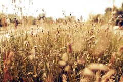Portrait of beautiful green meadow on sunlight Royalty Free Stock Images