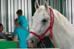 Portrait of beautiful horse Royalty Free Stock Photography