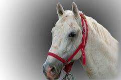 Portrait of beautiful horse Stock Photo