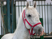 Portrait of beautiful horse Stock Photos