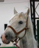 Portrait of beautiful horse stock image