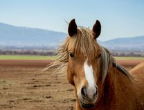 Portrait of a beautiful horse with smart eyes, the brilliant horse mane splashing on the air vector illustration