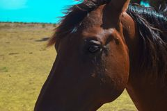 A Portrait of a Beautiful Horse Under the Sun. stock photo