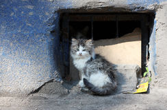 Portrait of a beautiful kitten. Kitten sitting on a street Royalty Free Stock Image