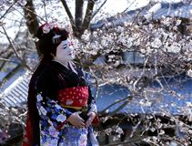 Portrait of beautiful lady in Maiko kimono dress Royalty Free Stock Photography