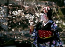 Portrait of beautiful lady in Maiko kimono dress Stock Photos