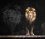 Portrait of a Beautiful lion geometric pattern Royalty Free Stock Photos