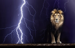 Portrait of a Beautiful lion, Lion and lightning Royalty Free Stock Images