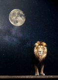 Portrait of a Beautiful lion, lion in the starry night moon Stock Photos