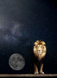 Portrait of a Beautiful lion, lion in the starry night moon Stock Images