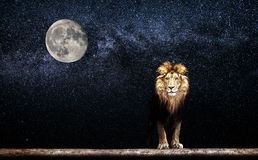 Portrait of a Beautiful lion, lion in the starry night. And moon stock photography