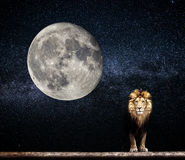 Portrait of a Beautiful lion, lion in the starry night moon Royalty Free Stock Images