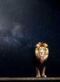 Portrait of a Beautiful lion, starry night Royalty Free Stock Image