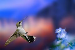A portrait of a beautiful little bird in flight. Beautiful blue flowers, blue shades and red color in the background. stock photography
