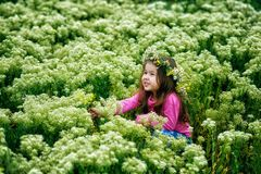 Portrait of a beautiful little girl in a wreath of daisies stock photography
