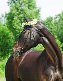 Portrait of beautiful mare with daisys Royalty Free Stock Photos