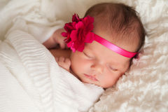 Portrait of a Beautiful Newborn Baby Girl. Headshot of a sleeping 8 day old newborn baby girl wearing a pink flower headband. She is wrapped in white gauzy Royalty Free Stock Image