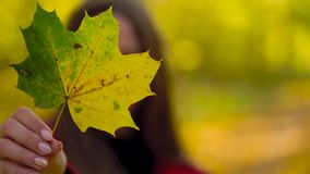 Portrait of a beautiful smiling girl with a yellow maple leaf in the foreground in the autumn forest. Weekend outside the city stock video