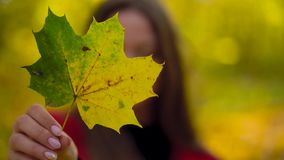 Portrait of a beautiful smiling girl with a yellow maple leaf in the foreground in the autumn forest. Slow motion. Portrait of a beautiful smiling girl with a stock footage