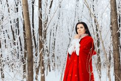 Beautiful Red Riding Hood Princess in Magic Winter Forest Stock Images