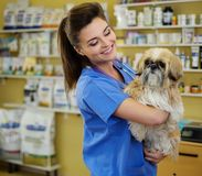 Portrait of a beautiful veterinarian holding cute Shih Tzu Royalty Free Stock Photo