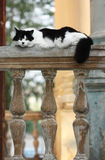 Portrait of a beautiful white black cat Stock Images