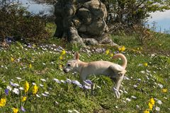Portrait of puppy dog peeing in the flowering meadow