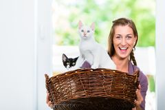Portrait of beautiful woman holding wicker basket with kittens Royalty Free Stock Photography