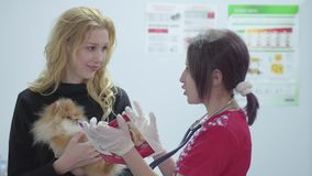 Portrait beautiful woman with a small dog in her arms and a veterinarian with a stethoscope in a veterinary clinic. Portrait of a pretty young woman with a small stock footage