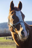Portrait of a beautiful young stallion in he pen Royalty Free Stock Image