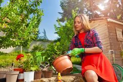 Beautiful woman cutting plants with garden pruner stock images