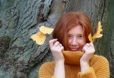 Portrait of beautiful young woman with red hair, ginger, redhead, red fox, red-brown, in a sweater in orange pullover, smiling,. Holding two autumn leaves in royalty free stock images