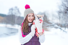 Portrait beauty girl with little dog chihuahua Stock Images