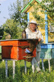 Portrait of a beekeeper on apiary at hive with bees Stock Images