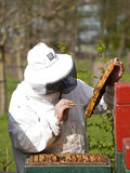 Portrait of a beekeeper gathering honey Royalty Free Stock Images
