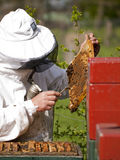 Portrait of a beekeeper gathering honey Royalty Free Stock Photo