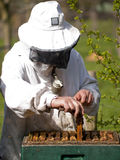 Portrait of a beekeeper gathering honey Royalty Free Stock Photography