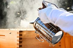 Beekeepers use a smoker. Special tool which is used for calm bees down. Portrait of beekeeper using a smoker to calm down the bees. Beekeeping on sunny day stock images
